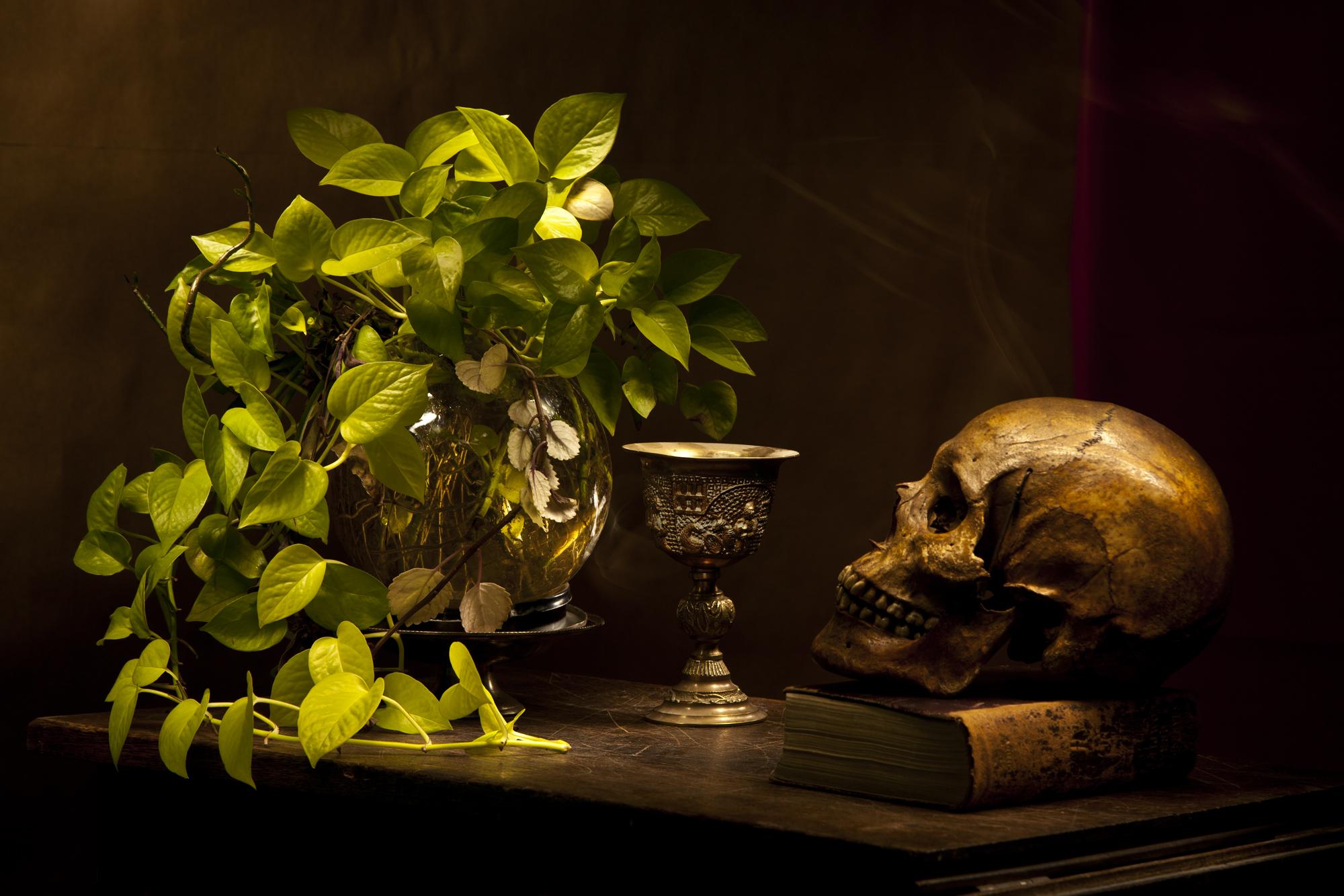 Cráneo y potus